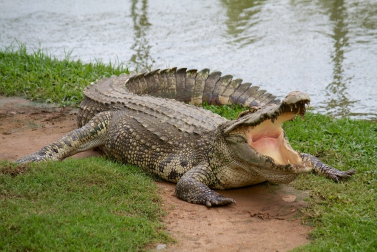 Pastor tenta imitar Jesus e caba devorado por crocodilos